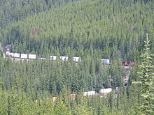 Canadian Forest In British Colombia