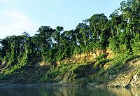 Manu National Park in the Amazon