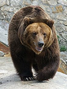 Bear On The Move    Symbol of Russia