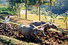 Agriculture Has Been And Still Is A Major Industry In Indonesia