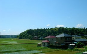Rice Cultivation In Japan