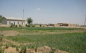 A typical dehkan farm in Khorezm Province: family house, 0.3-0.4 ha cropped land, farm structures for livestock.