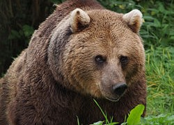 The Return Of The Russian Bear In The Middle East